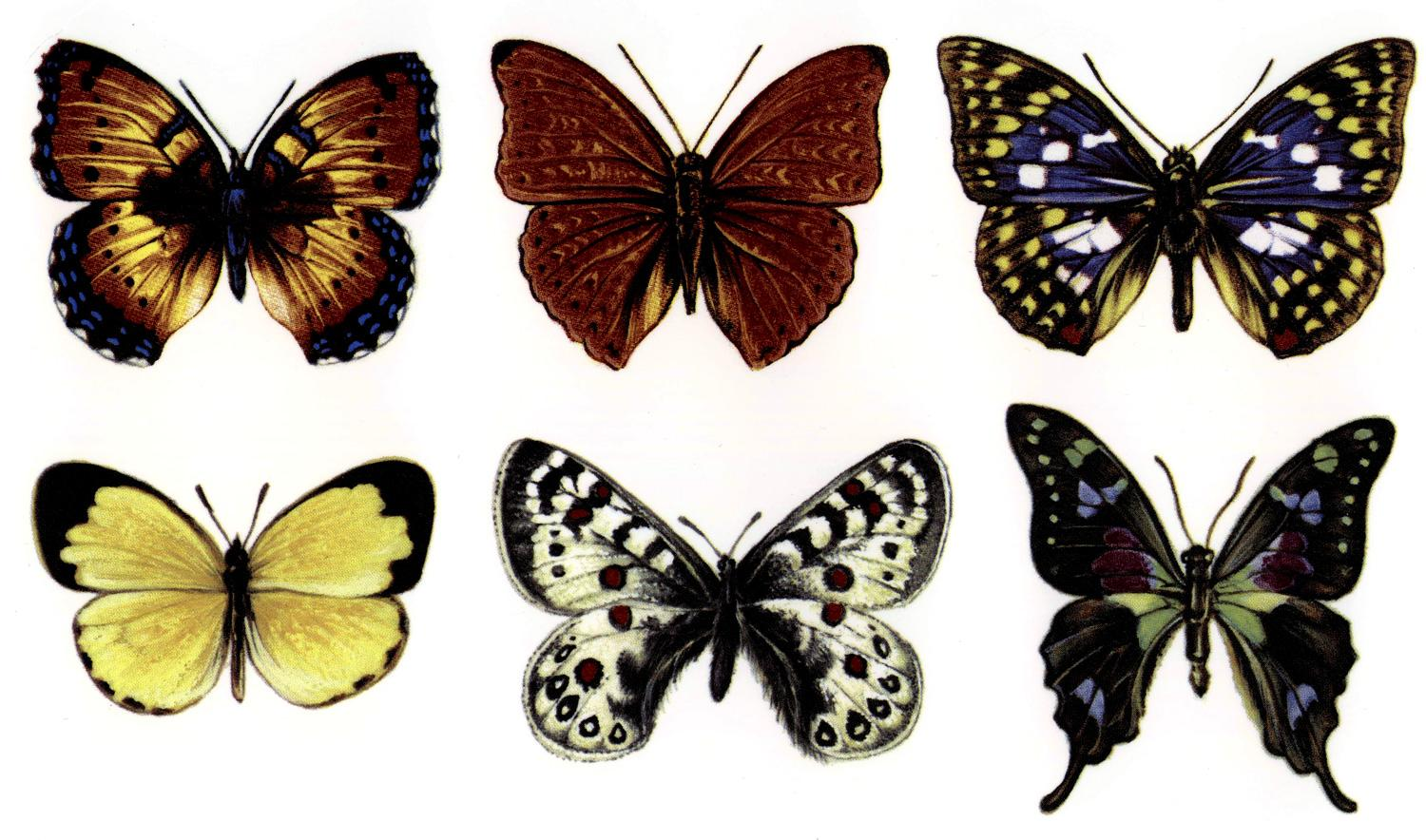 Large Butterfly Color Enamel Decals