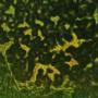 Youghiogheny Emerald Green Opal Mottle