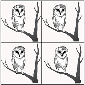 Tree Owl Black Enamel Decals - 4 Pack