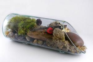 Free Upcycled Bottle Terrarium Project Guide